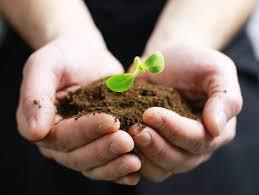 Photo de la news Vente de Plants !!